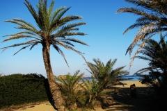 palms big